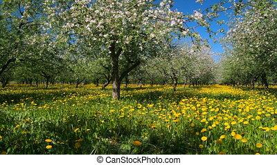 fleur, pomme, jardin