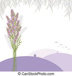 fleur pourpre, lavande