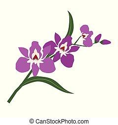 fleur pourpre, nature, orchidée