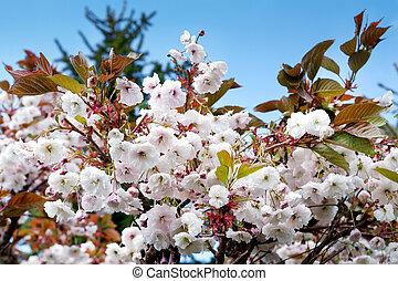 fleur, printemps, arbre