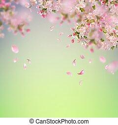 fleur, printemps, cerise