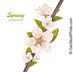 fleur, printemps, fond, cerise