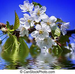 fleur, printemps, fond