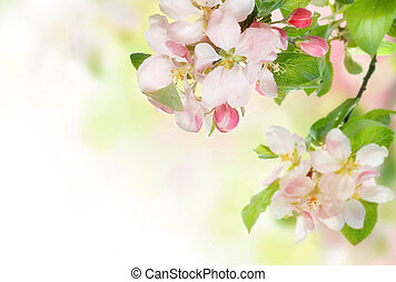 fleur, printemps, frontière