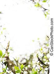 fleur, printemps, gabarit