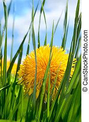 fleur, printemps, herbe