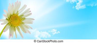 fleur, printemps, pâquerette, conception, saison, floral