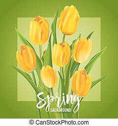 fleur, printemps, -, vecteur, fond, tulipes