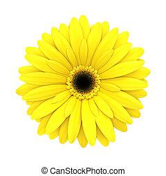 fleur, render, -, isolé, jaune, pâquerette, blanc, 3d