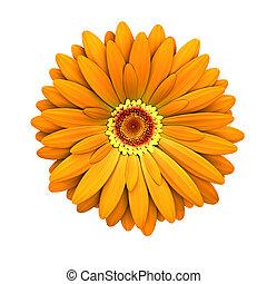 fleur, render, -, isolé, pâquerette, orange, 3d