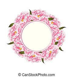 fleur rose, bannière, couronne, pivoine