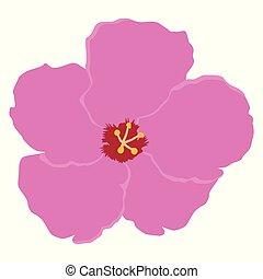 fleur rose, isolé, vecteur, fond, blanc, orchidée