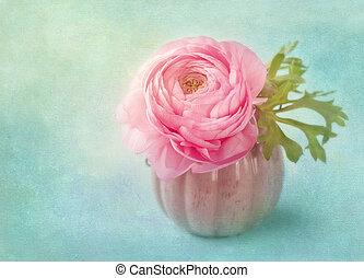 fleur, rose, ranunculus