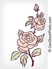 fleur rose, rose, vecteur, vendange, carte