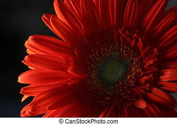 fleur, rouges