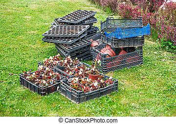 fleur, seedlings, dans boîte, sur, herbe verte, depuis, above., fond, disposition, à, gratuite, copyspace