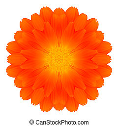 fleur, souci, isolé, orange, blanc, mandala, kaléidoscope