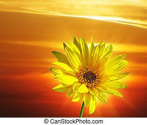 fleur source, coucher soleil