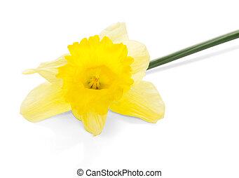 fleur source, jaune
