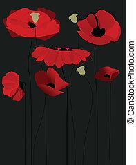 fleur, sur, arrière-plan noir, pavot, fleurs