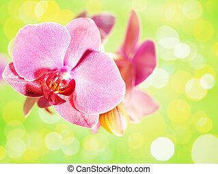 fleur, sur, arrière-plans, résumé vert, orchidée
