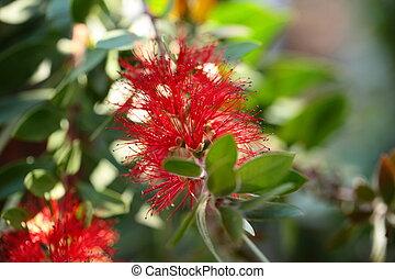 fleur tropicale, jungle, rouges
