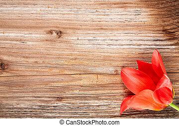 fleur, tulipe, rouges, table bois