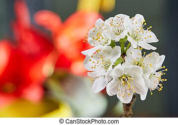 fleur, tulipes, blanc, pomme, devant
