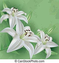 fleur, vendange, arrière-plan vert, floral, lis