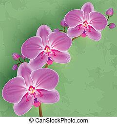 fleur, vendange, arrière-plan vert, floral, orchidée