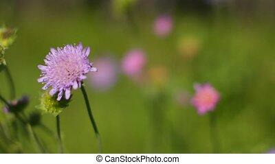 fleur, vent