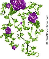 fleur, vignes