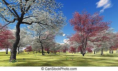 fleurir, cornouiller, arbres, dans, verger, dans, temps ressort, 3d, rendre