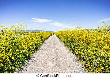 fleurir, ensemble, sud, francisco, haut, baie, piste, san, ...