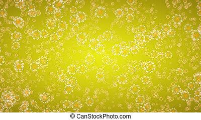 fleurir, marguerite, fond, pâquerette, fleurs jaunes