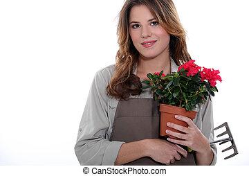 fleuriste, plante, râteau, tenu