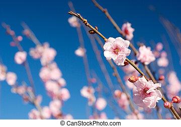 fleurs, #4