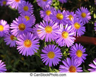 fleurs, 4
