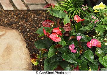 fleurs, anthurium