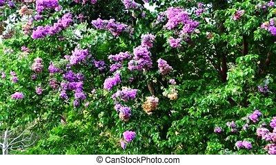 fleurs, arbre
