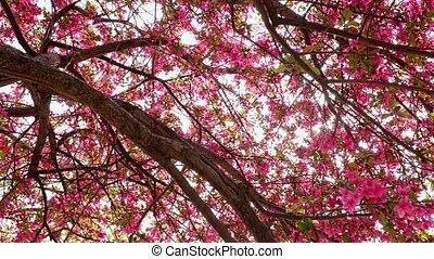 fleurs, arbre diverge, rose