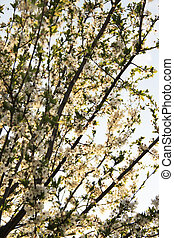 fleurs, arbres, beau, fleur