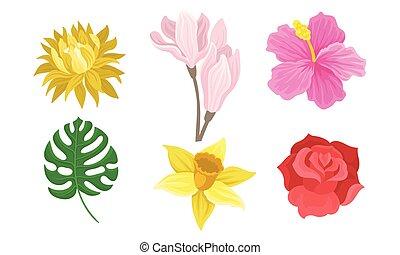 fleurs, arrière-plan., ensemble, blanc, illustration, vecteur, leaves.