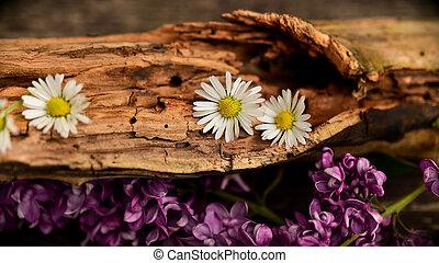 fleurs, bûche