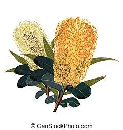 fleurs, banksia, jaune