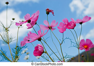 fleurs, beau