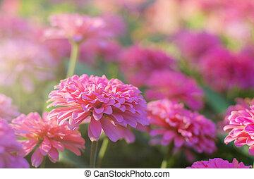 fleurs, beautiful.