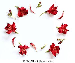 fleurs, blanc, alstromeria, fond