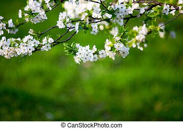 fleurs, blanc