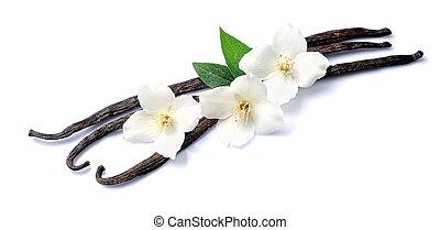 fleurs, blanc, vanille, bâtons